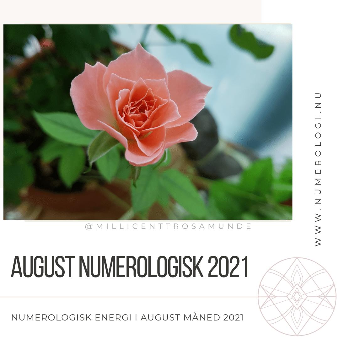 Numerologisk energi august måned 2021 - klassisk numerolog Millicentt Rosamunde