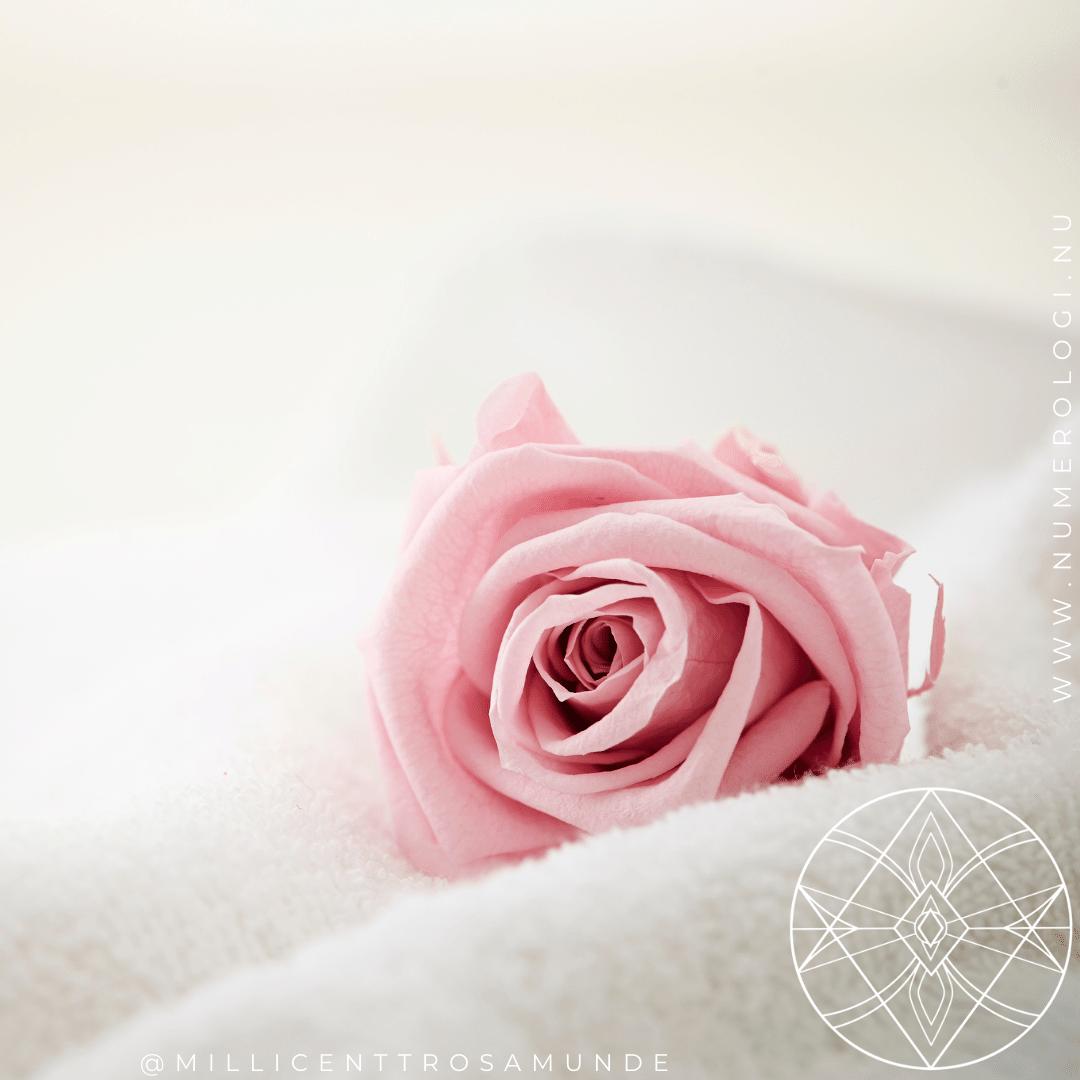 Den Klassiske Numerolog Uddannelse - Instituttet for Numerologi - Millicentt Rosamunde - rose sisterhood søsterskab